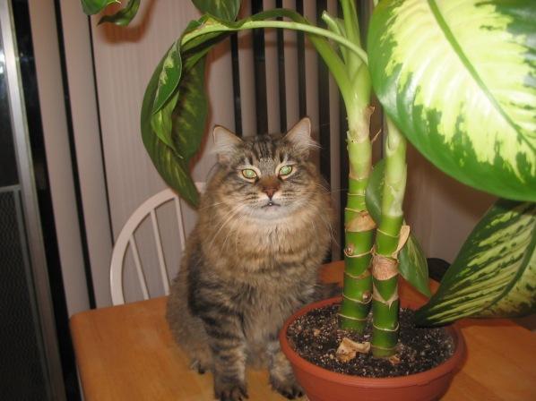 cleo_plant