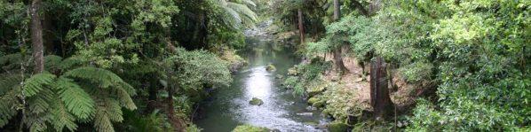 cropped-whangarei-falls-stream-5.jpg
