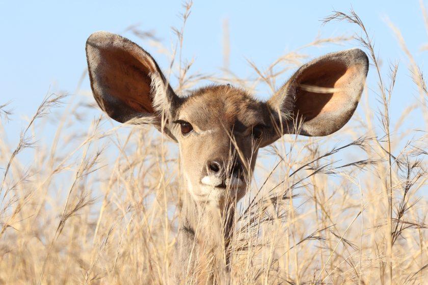 animal-animal-photography-barbaric-561870